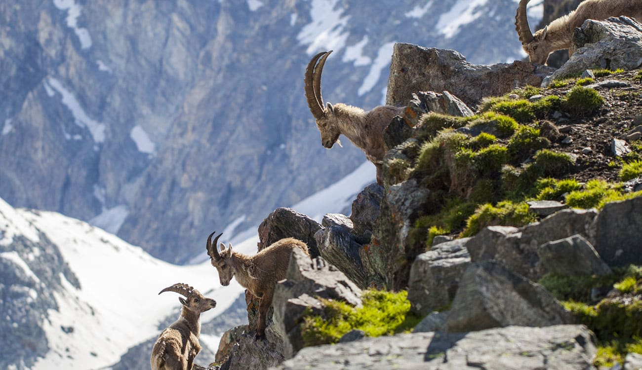 Alpine Wildlife