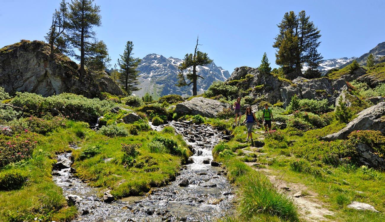 Hike-Safari in the Alps