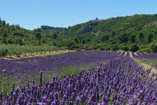 From-the-Alps-to-the-Alpilles-Provence-Swisskisafari